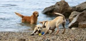 psi na plaži